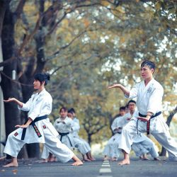 discipline, martial arts, self confidence